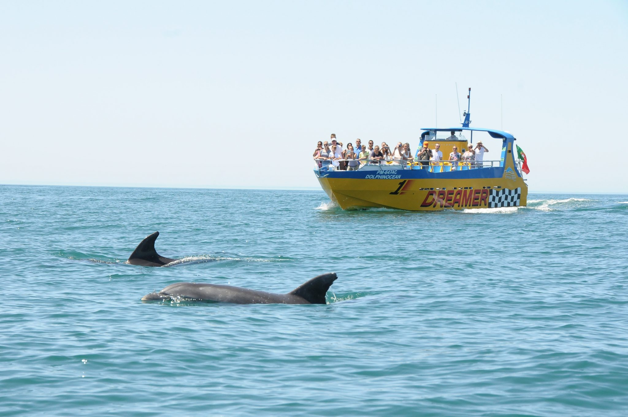 Caves & dolphin watching from Albufeira - Dreamer - SeaBookings