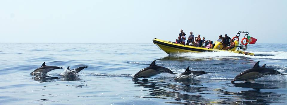 Albufeira things to do: caves and dolphin watching tour