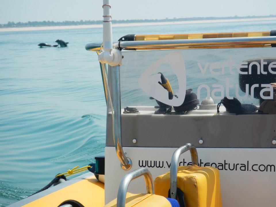 Observa 231 227 O De Golfinhos Em Sesimbra Seabookings