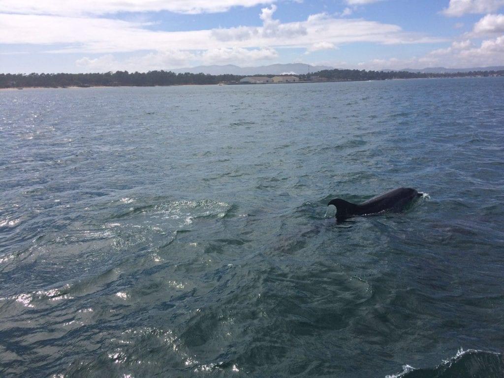 Dolfijnen Setúbal (5)
