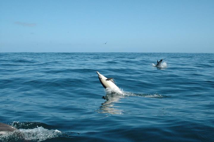 Dolphin-watching-boat-tour-in-Aveiro-3