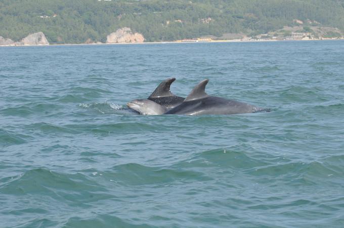 Dolphin Sado Out16