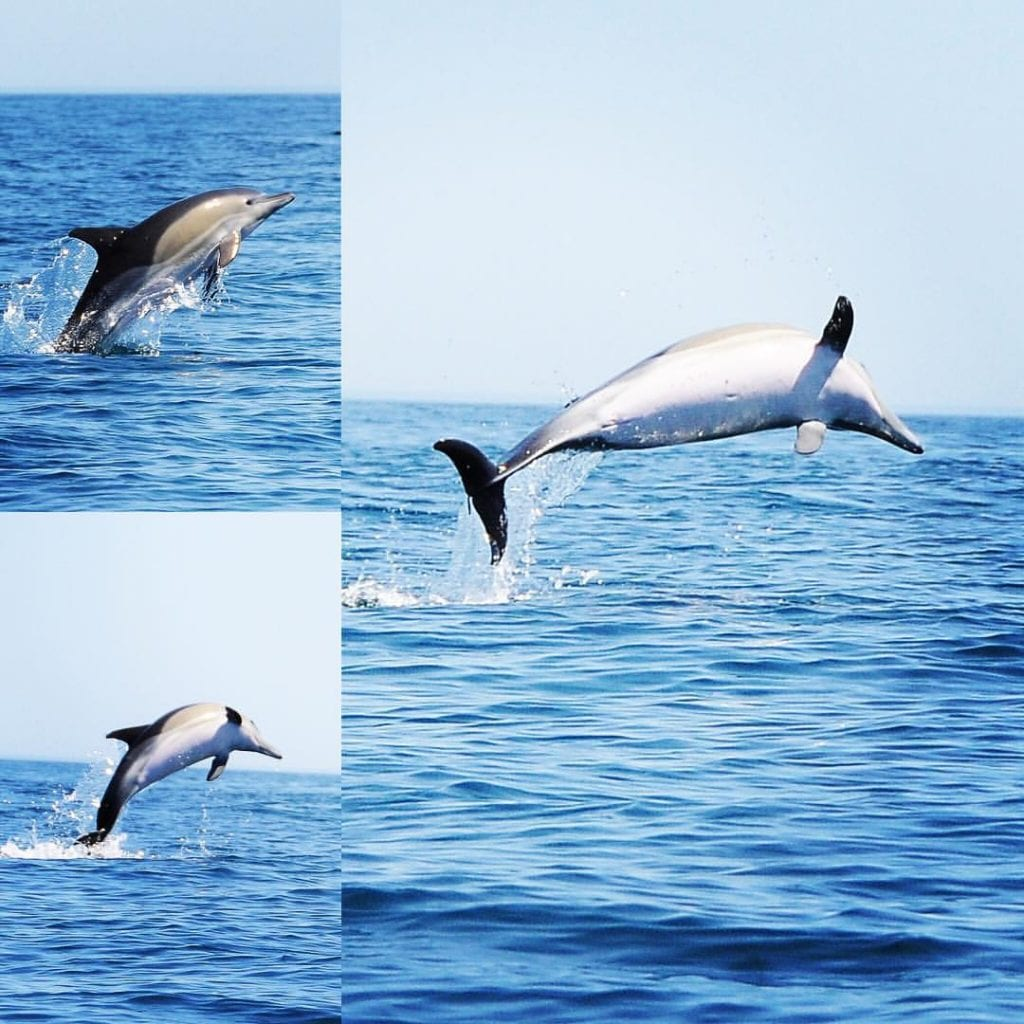 cetaceans in the Algarve
