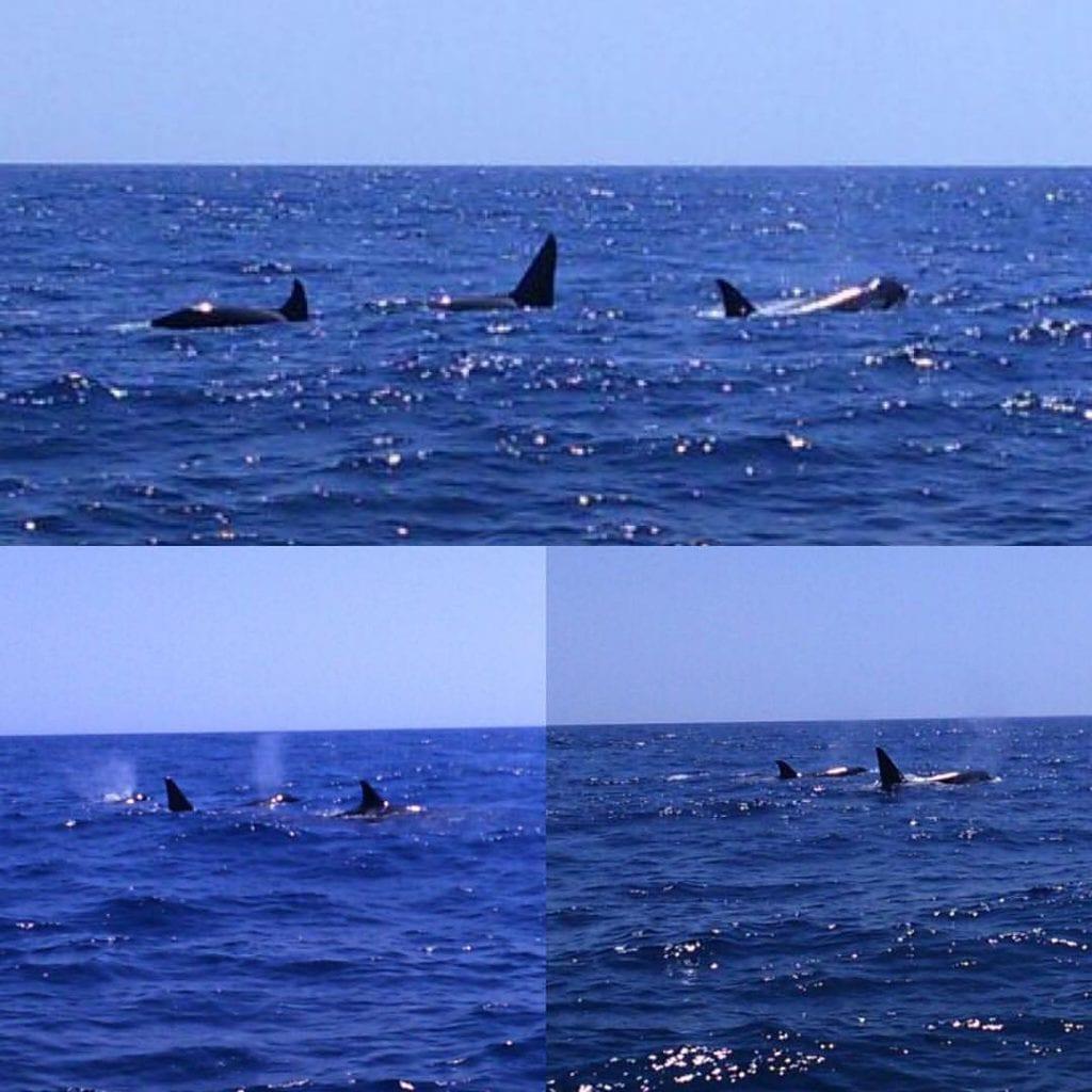 Cetaceans Algarve SeaBookings (4)
