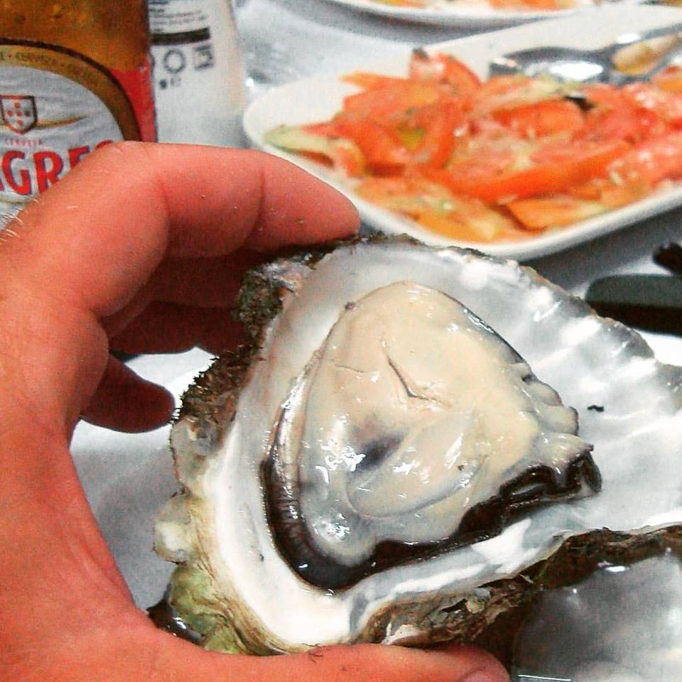 Typical oysters from Culatra Island