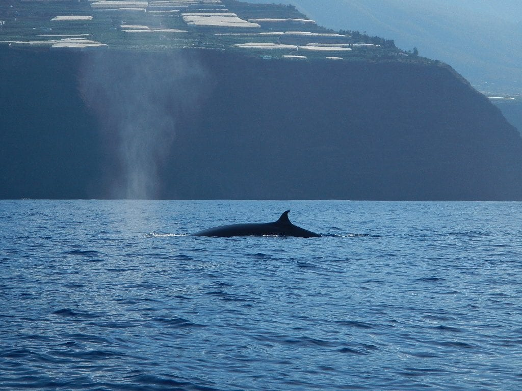 Sometimes, the whales are really near shore