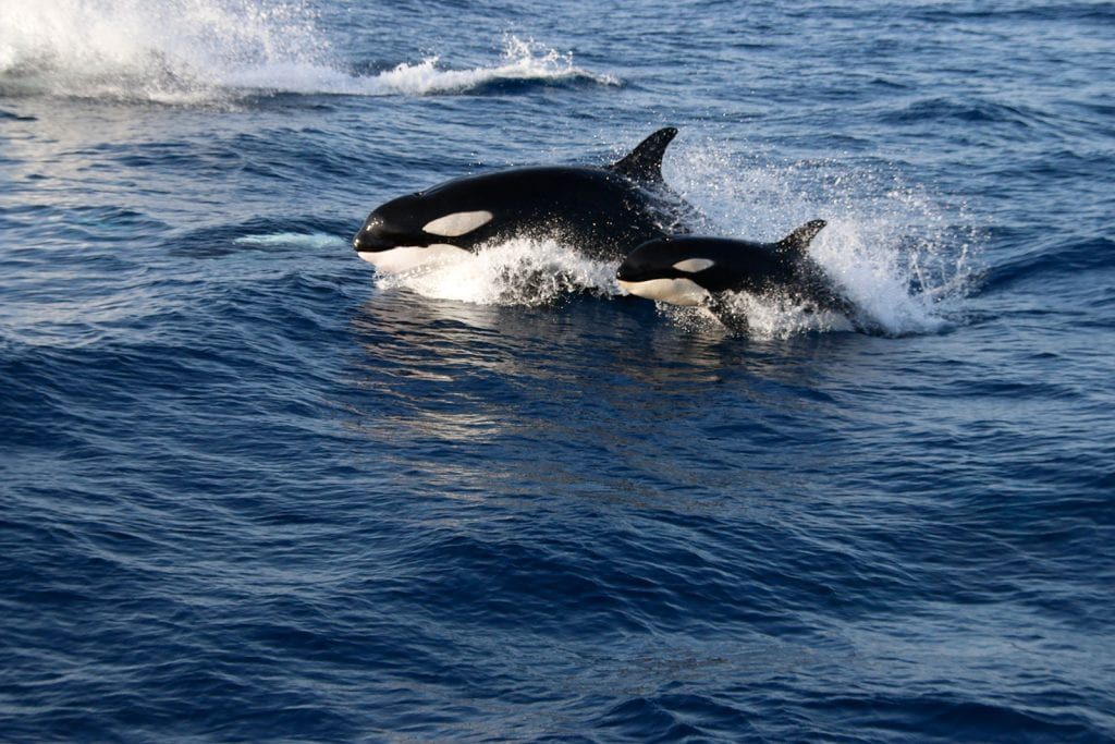 Even orcas can be spotted, but only a few times a year