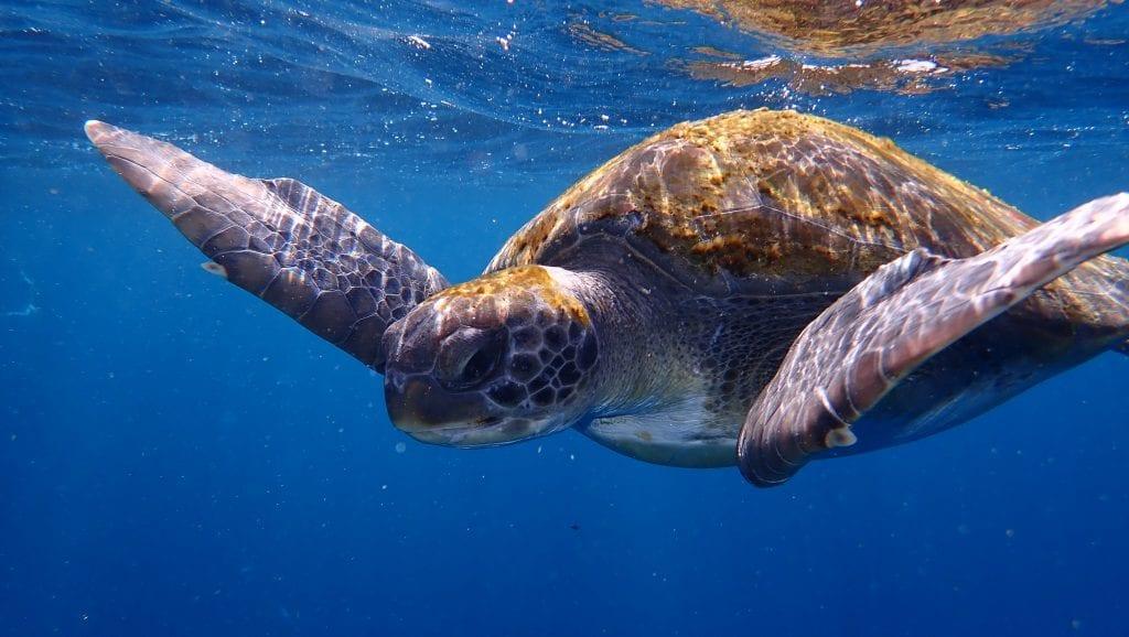 It's impressive how close the turtles come!