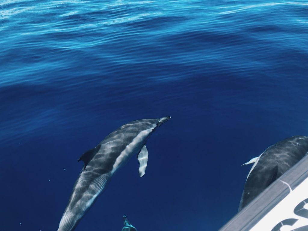 From the boat you can clearly see the dolphins underwater too
