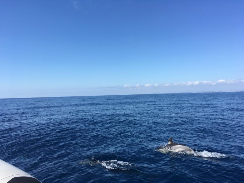 Some of the dolphins came very close!